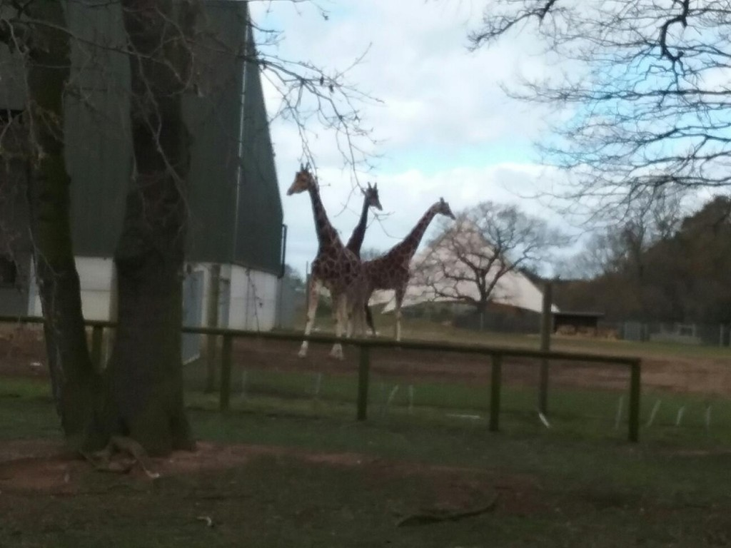 Yorkshire Wildlife Park & World Book Day